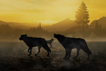 pack of wolves in the woods immersed in the morning fog