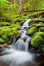 A Small Cascade Flowing Near Sol Duc Falls, Olympic National Forest, Washington, USA