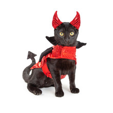 Black Cat In Halloween Devil Costume