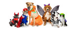 Cats and Dogs in Halloween Costumes Web Banner
