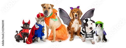 Fényképezés Cats and Dogs in Halloween Costumes Web Banner