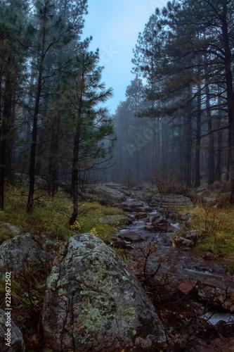 Foto op Plexiglas Landschappen Foggy Stream