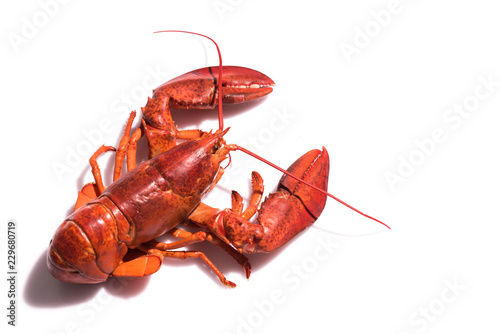 Lobster on white background with copy space Wallpaper Mural