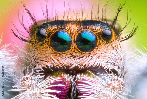 Photo sur Toile Croquis dessinés à la main des animaux extreme magnified jumping spider head and eyes