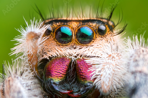 Photo Stands Hand drawn Sketch of animals extreme magnified jumping spider head and eyes