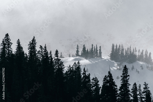 Poster Morning with fog Severe winter weather in the Rocky Mountains, Colorado