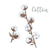 Cotton Branches Hand Drawn Vec...