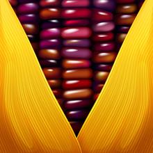 Purple Corn Seed Texture Closeup Wallpaper Vector Illustration