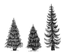 Fir Tree, Christmas Tree Or Pine Isolated On A White Background. Hand Drawn Illustration. The Set Of Trees. Drawn By Ink.
