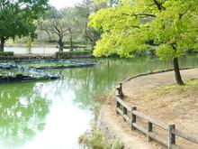 公園の沼と木