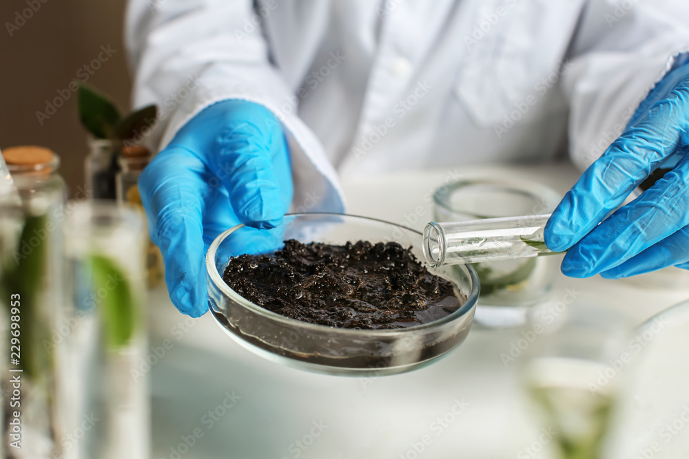 Fototapeta Scientist working with soil in laboratory