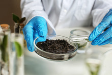Scientist Working With Soil In...