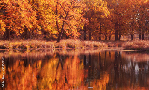 Montage in der Fensternische Ziegel Oak tree forest panorama with pond. Autumn season with yellow and orange colors.