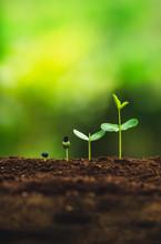 Seedling Growth Planting Trees...
