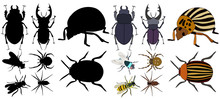 Vector, Isolated, Insects, Bee...