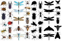 Big Set Of Insects