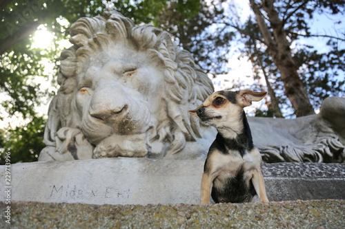 Foto  Kleiner Hund vor Skulptur eines Löwen