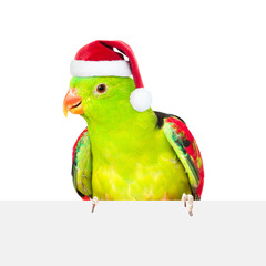 Fototapeta Red-Winged Parrot (Aprosmictus erythropterus)in red christmas hat over white banner. isolated on white background