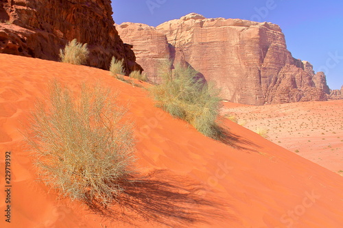 Fotobehang Midden Oosten The colorful Wadi Rum desert in Jordan, Middle-East, with colorful sand dunes and mountains