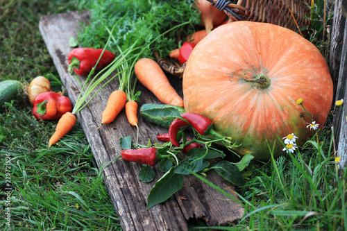 Photo Vegetables. Fresh organic vegetable Auvers nature batskground