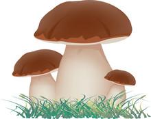 Gruppo Di Funghi Commestibili ...