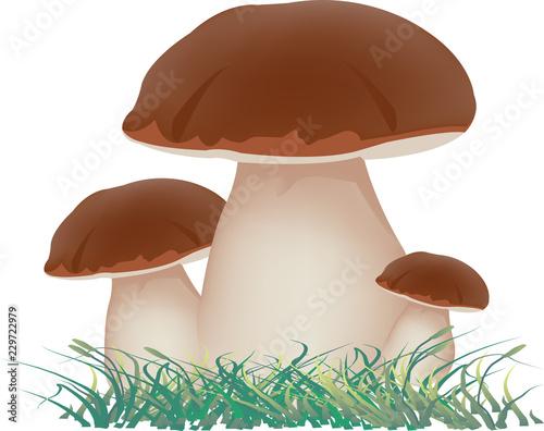 Fototapeta gruppo di funghi commestibili sottobosco porcini