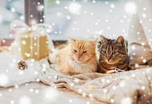Pets, Christmas And Hygge Concept - Two Cats Lying On Window Sill With Blanket And Present At Home Over Snow