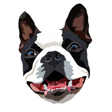 Vector Closeup Portrait Of The  Dog Boston Terrier Breed