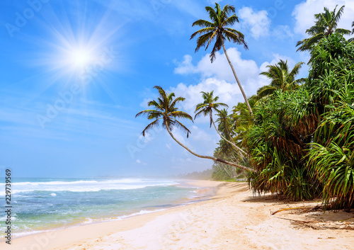 Poster Asia land exotic tropical beach with palms
