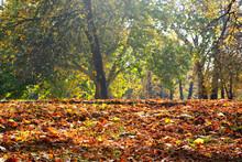 Autumn Leaves,leaves,color Lea...