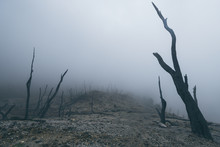 Landscape, Volcano, Forest, Dead, Mysterious, Nature. Indonesia, Java, Volcano