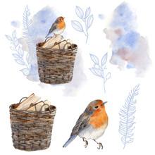 Watercolor Winter Bird Illustration.