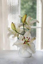 White Lilies In Pitcher