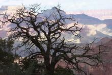 Winter Tree At Grand Canyon's North Rim