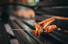 Chestnut And Dry Leaf From The Tree On A Wooden Bench With Blurred Background Closeup. Concept Of Autumn In The City