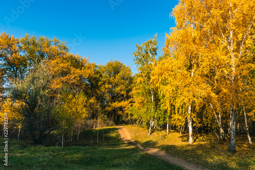 Keuken foto achterwand Bomen Autumn landscape - road in autumn mixed forest on a bright sunny day
