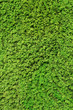 Moos, grün, Natur, Hintergrund
