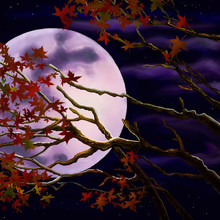 Branches With Autumn Foliage On The Background Of The Night Moon.