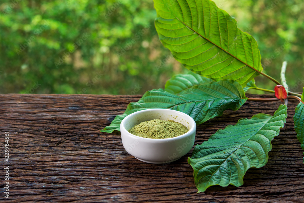 Fototapety, obrazy: Mitragynina speciosa or Kratom leaves with powder product in white ceramic bowl on wood table and blurred nature background