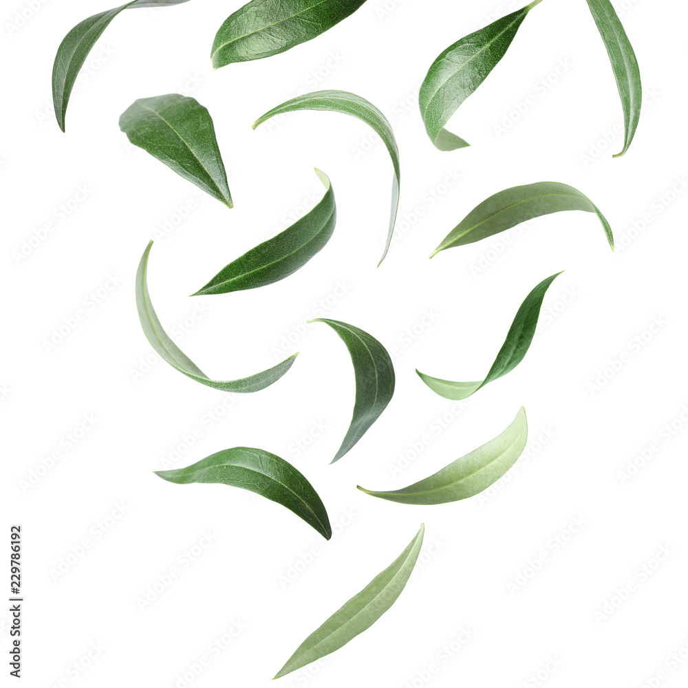 Fototapety, obrazy: Set with green olive leaves falling on white background