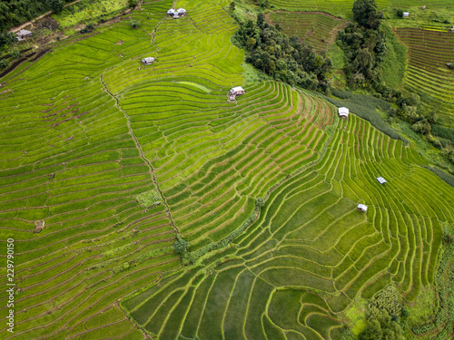 Garden Poster Rice fields Aerial top view photo from flying drone of the Buddhist temple and fields in the countryside of Chiang Mai Northern Thailand