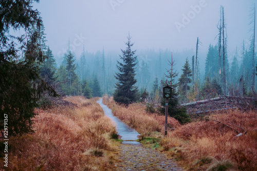 Foto op Canvas Diepbruine fog in forest