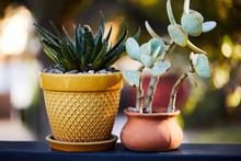 A Pair Of Potted Plants