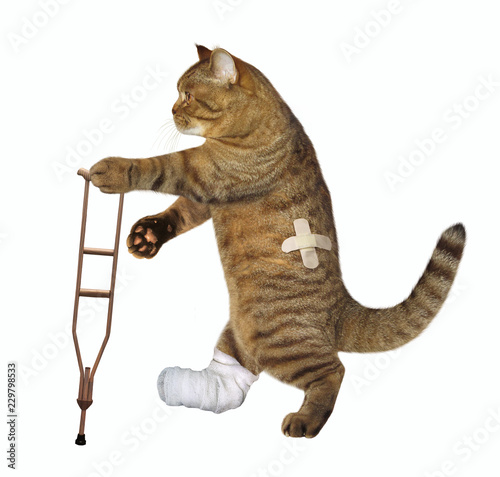 The cat with the broken leg uses the crutch. White background. Tapéta, Fotótapéta