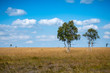 hohes Venn in Belgien - Baum im Moor
