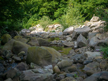 Rocky Stream In A Forest Flowi...