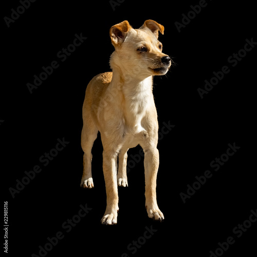 Foto  Young mongrel dog standing and looking away