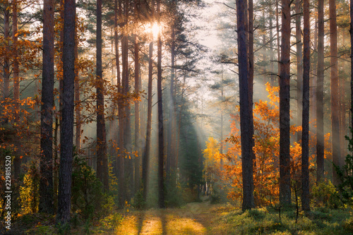 Fototapeten Wald Fall forest