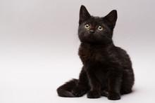 Black Little Kitten On A White Background