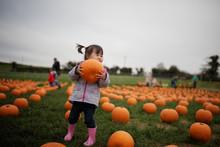 Toddler Girl Picking Pumpkin In Farm